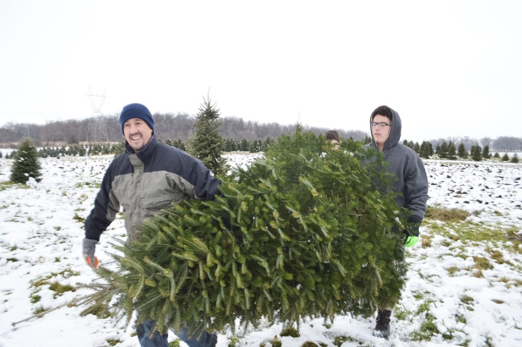 christmas-tree-carrying-it