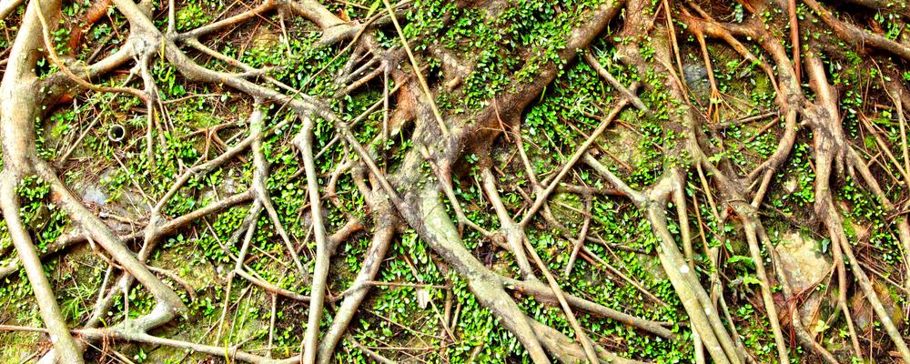 Growing Deep Roots